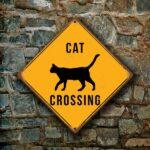Cat Crossing Sign 3
