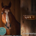 Custom Horse Sign